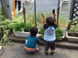 野菜の収穫2