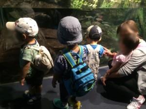 京都水族館4